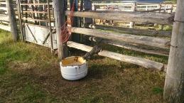 Horse feed inspector.