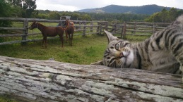 Hanging out with the weanlings.